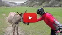 Видео: «Крымский калейдоскоп»